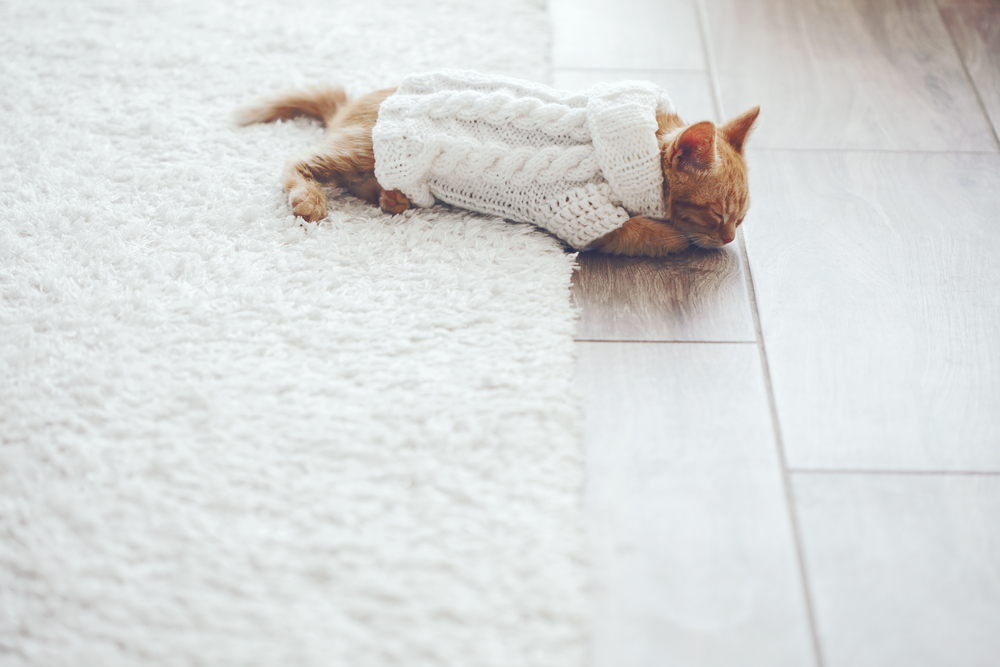 3 Pet Friendly Flooring Options Home Improvement