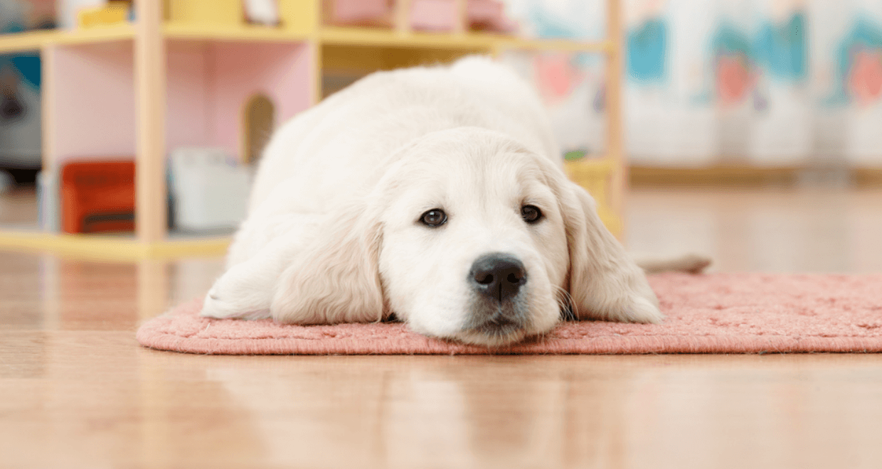 Home flooring ideas illinado llc for Dog friendly flooring ideas