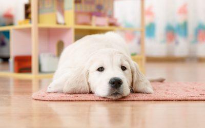 3 Pet-Friendly Flooring Options