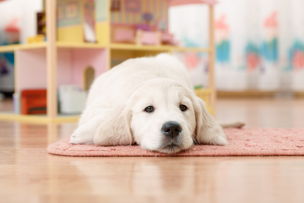 3 Pet Friendly Flooring Options